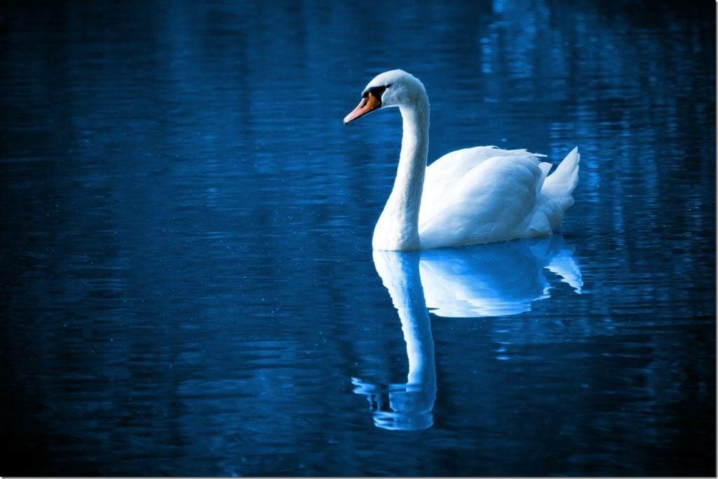 日常生活の自己観察・もう一人の自分を映し出す「鏡」の性質を知る